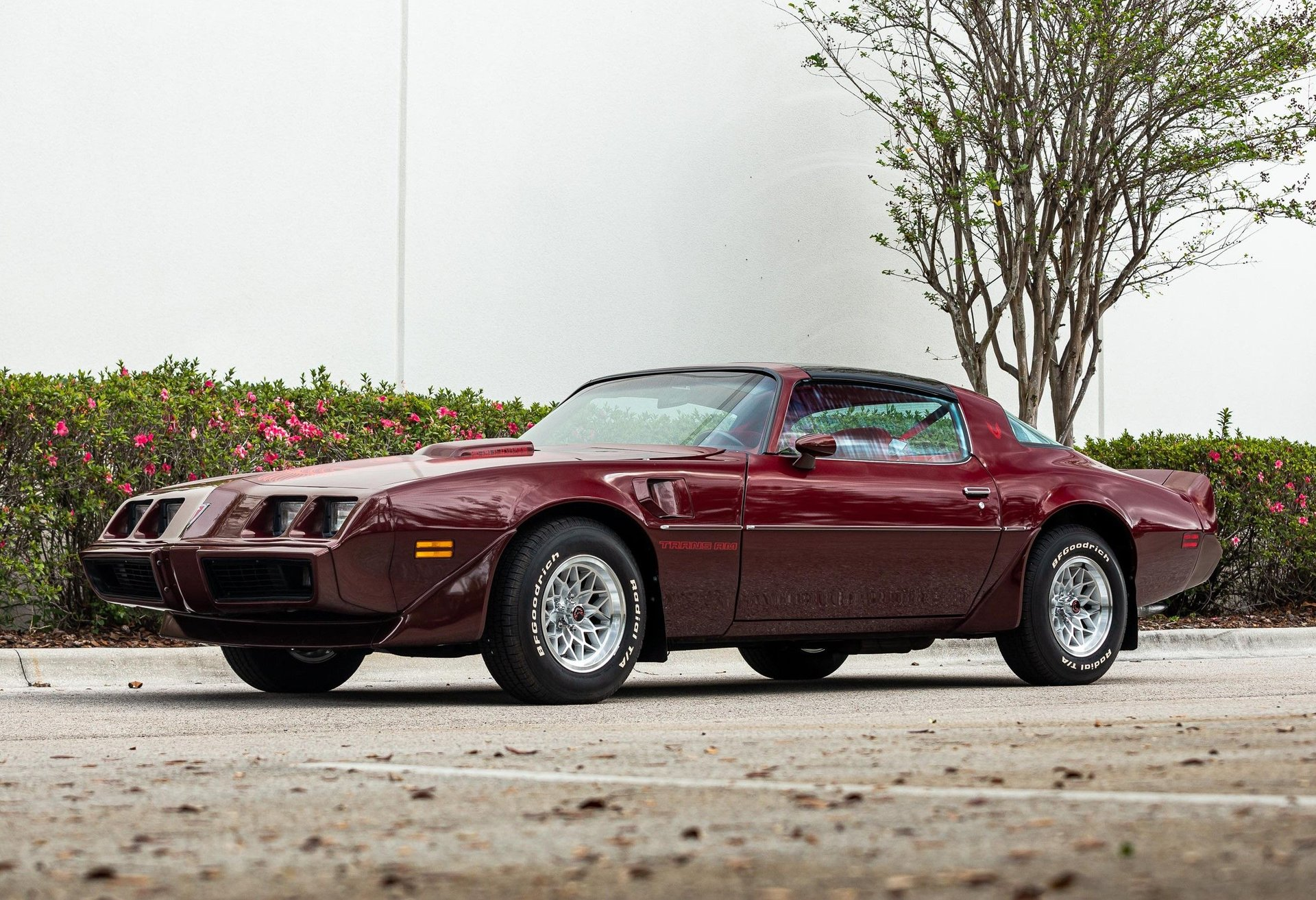 1981 pontiac trans am coupe